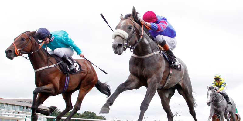 Lingfield_Racing