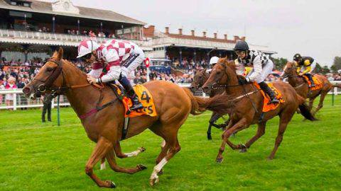 The Voice of Value: Race-by-race guide to Ladies Day at Ayr