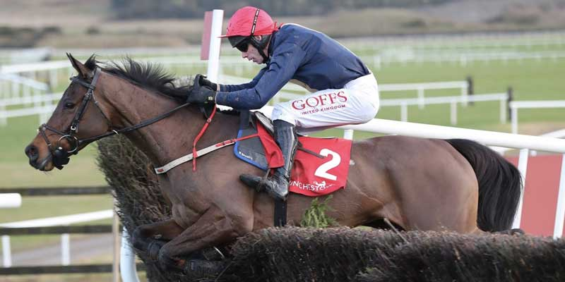City Island is a contender once again at the Cheltenham Festival