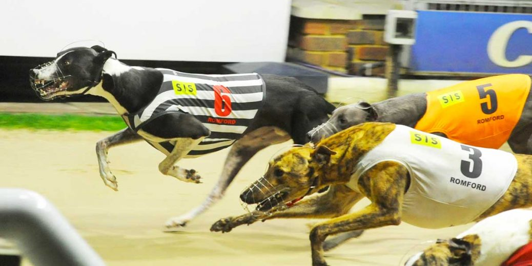 Romford Puppy Cup Tips